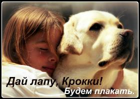 Стихи о собаках