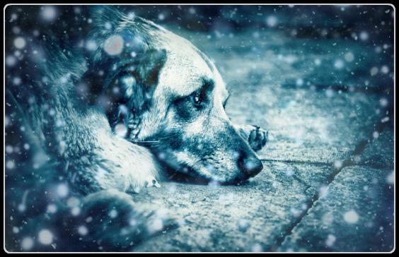 Бездомный пёс стихи