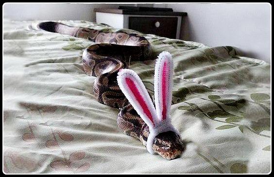 Змея стихи